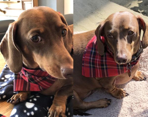 NEW Dog Neckerchief